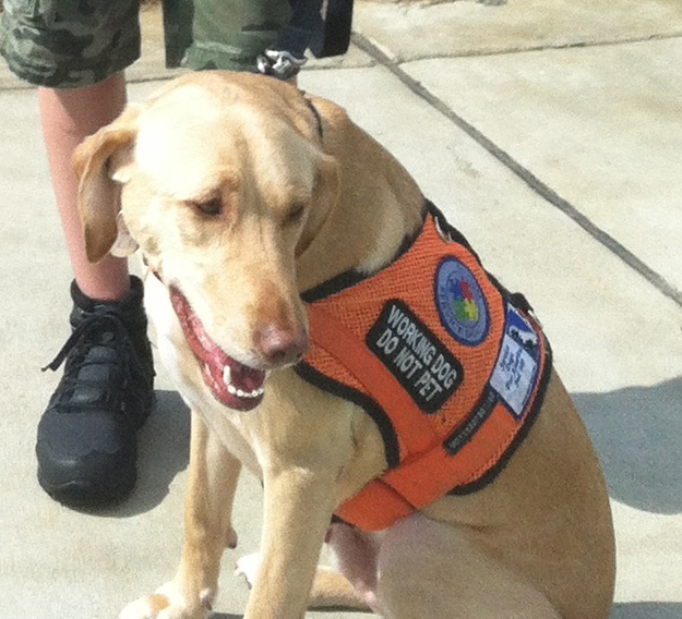 Where Do I Get My Service Dog A Vest