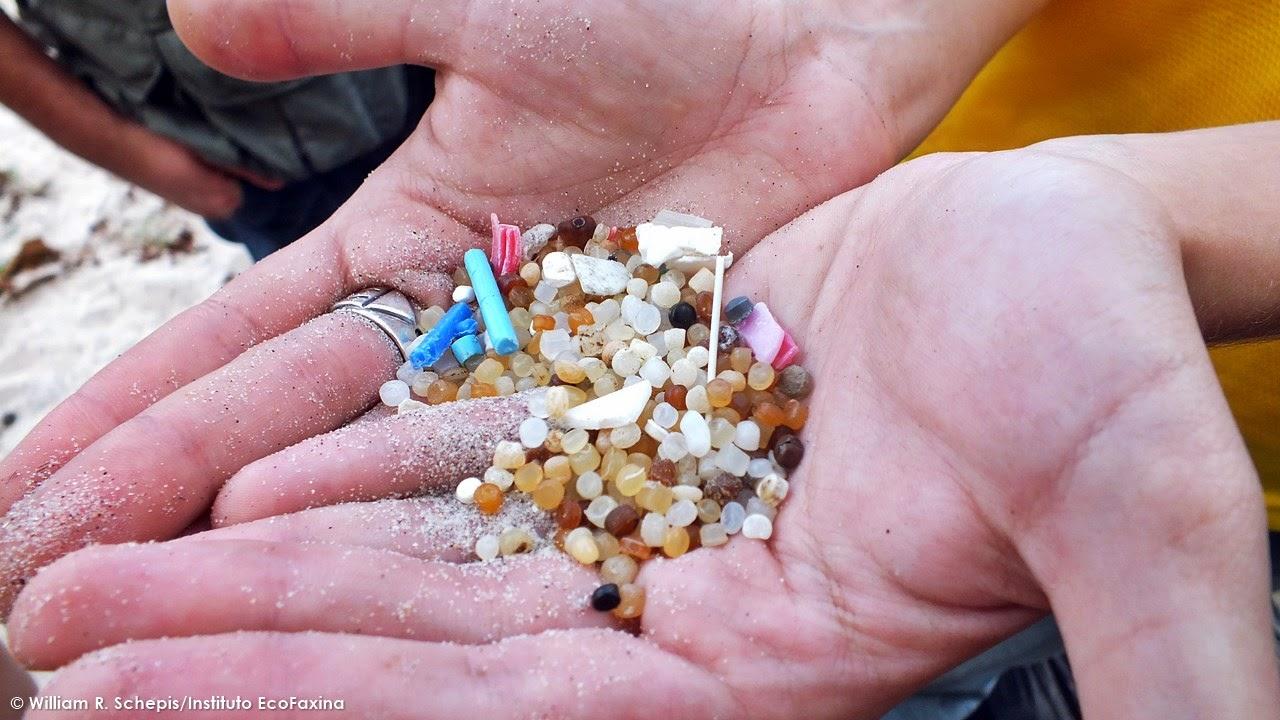 Voluntária exibe alguns pellets coletados durante ação realizada na Prainha Branca, em Guarujá. Foto: William R. Schepis/Instituto EcoFaxina