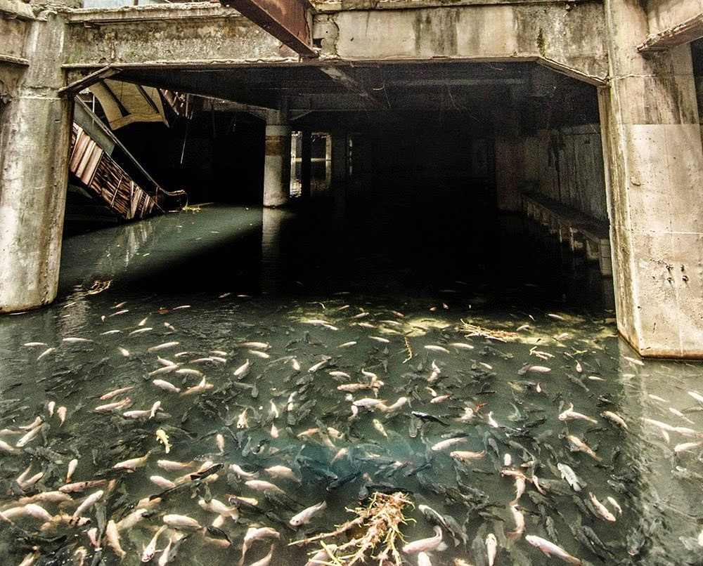 http://www.ibtimes.co.uk/thailand-workers-catch-3000-fish-flooded-abandoned-new-world-shopping-centre-bangkok-1483191