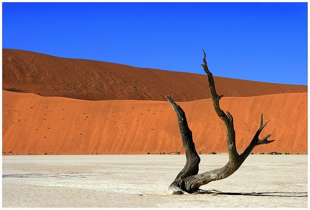 A Dead Tree, Alone In The Desert. Dead vlei by benny_bloomfield