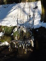 żywa wierzbowa ławka w ogrodzie botanicznym w krakowie
