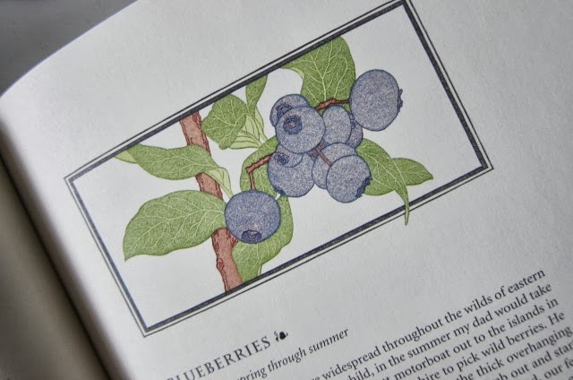 how to grow large blueberries
