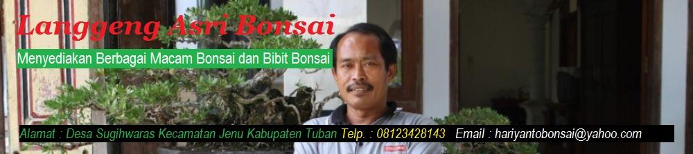 Langgeng Asri  Bonsai