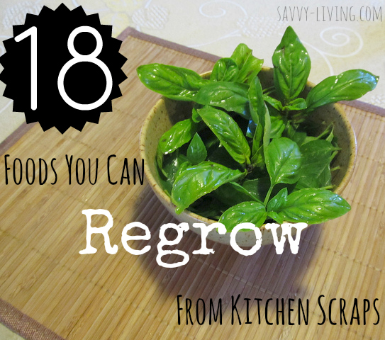 16 Foods You Can Re Grow From Kitchen Scraps: The Backyard Garden: Foods You Can Regrow From Kitchen Scraps
