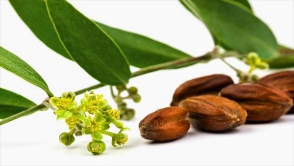 Cuáles son los beneficios del aceite de jojoba
