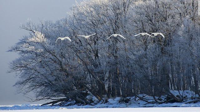 Lake Kussharo (Hokkaido)