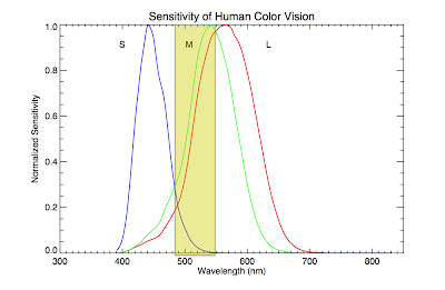 Wavelength-dependent sensitivity of cone cells