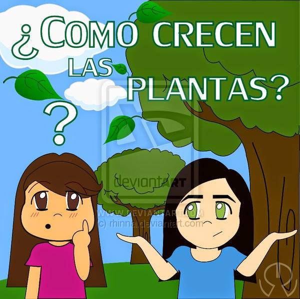 ¿ cómo crecen las plantas?