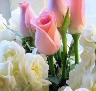 ♥ Bunga ku yang indah..♥