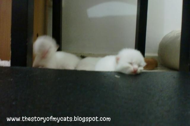 kucing lucu di bawah kursi