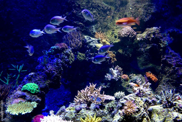 landscape of coral reef and fish at Toronto Aquarium