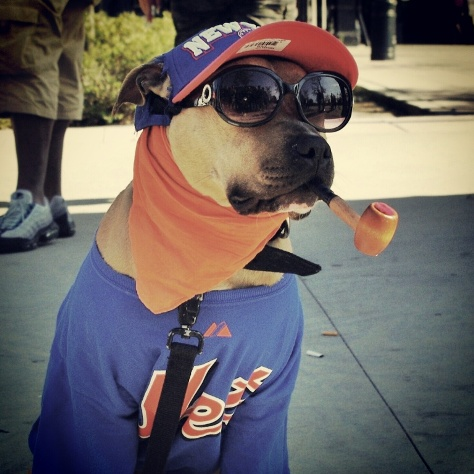 NY Mets Greatest Fan Dog