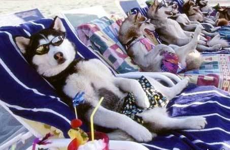 http://4.bp.blogspot.com/-psxCNcZnqII/TZeT1ksP3LI/AAAAAAAAABE/kuE6fGopjDk/s1600/perros-en-la-playa.jpg