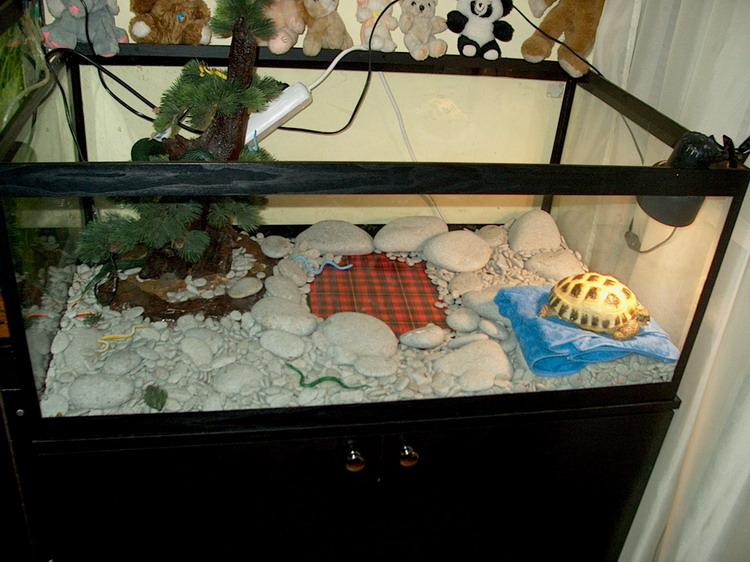 Террариум своими руками для сухопутной черепахи