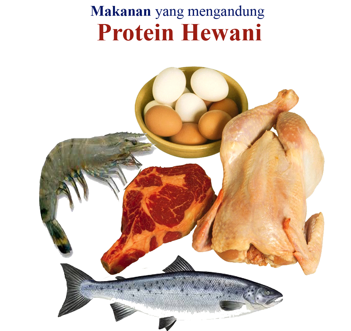 Makanan Yang Mengandung Protein Hewani Tugas Sekolah Ku