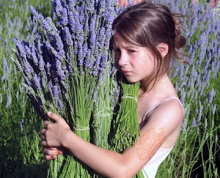 Permalink to Lavender – Flower with thousand benefits