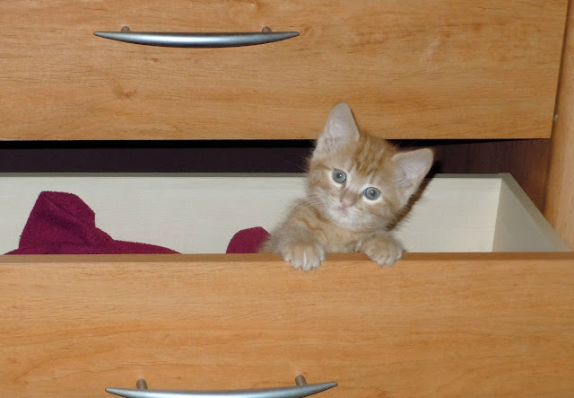 funny cats, cute cat pictures, kitten in drawer