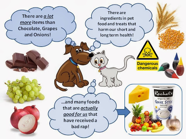Foods That Should Not Be Fed To Dogs