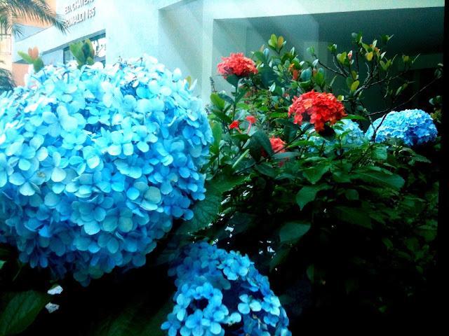 Uma bela flor, que se presta mais em locais frios...