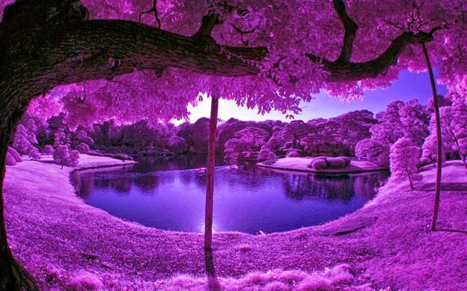 Purple Tree HD Wallpapers