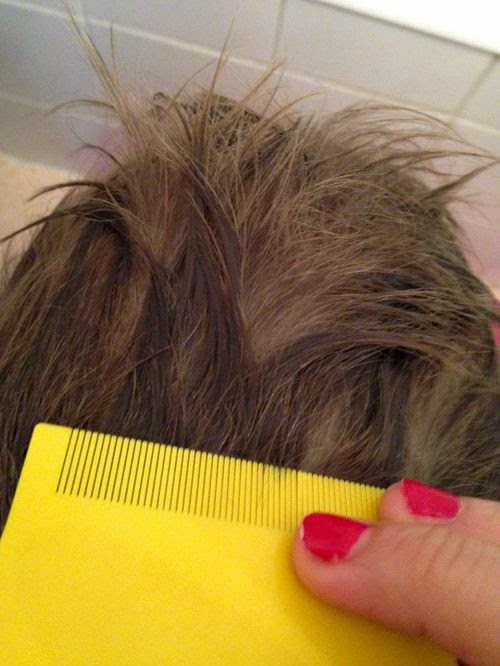 Poux coloration cheveux