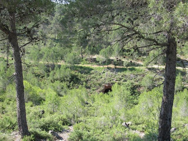 Vista del frondós sender d'Atzeneta
