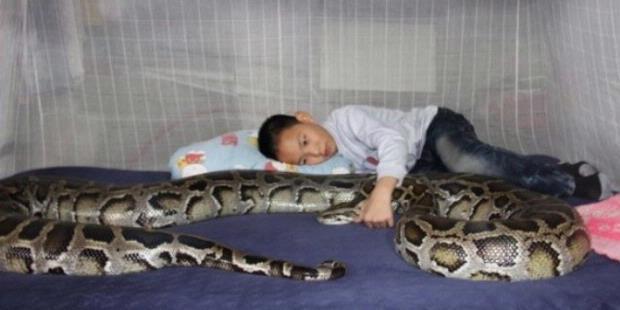 Bocah China Hidup Bersama Ular Piton sejak Lahir