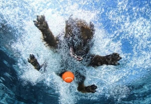 Foto-foto anjing di bawah air yang unyu