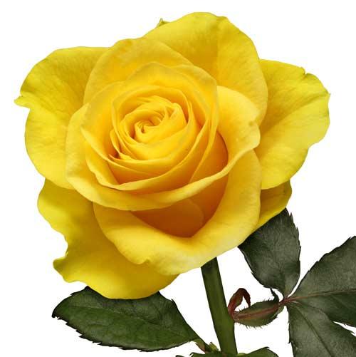 Sepanjang sejarah, kuning telah berhubungan erat dengan matahari ...
