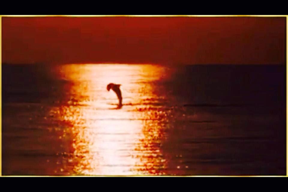 Golfinhos na Praia do Cassino