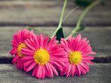 3 lindas flores