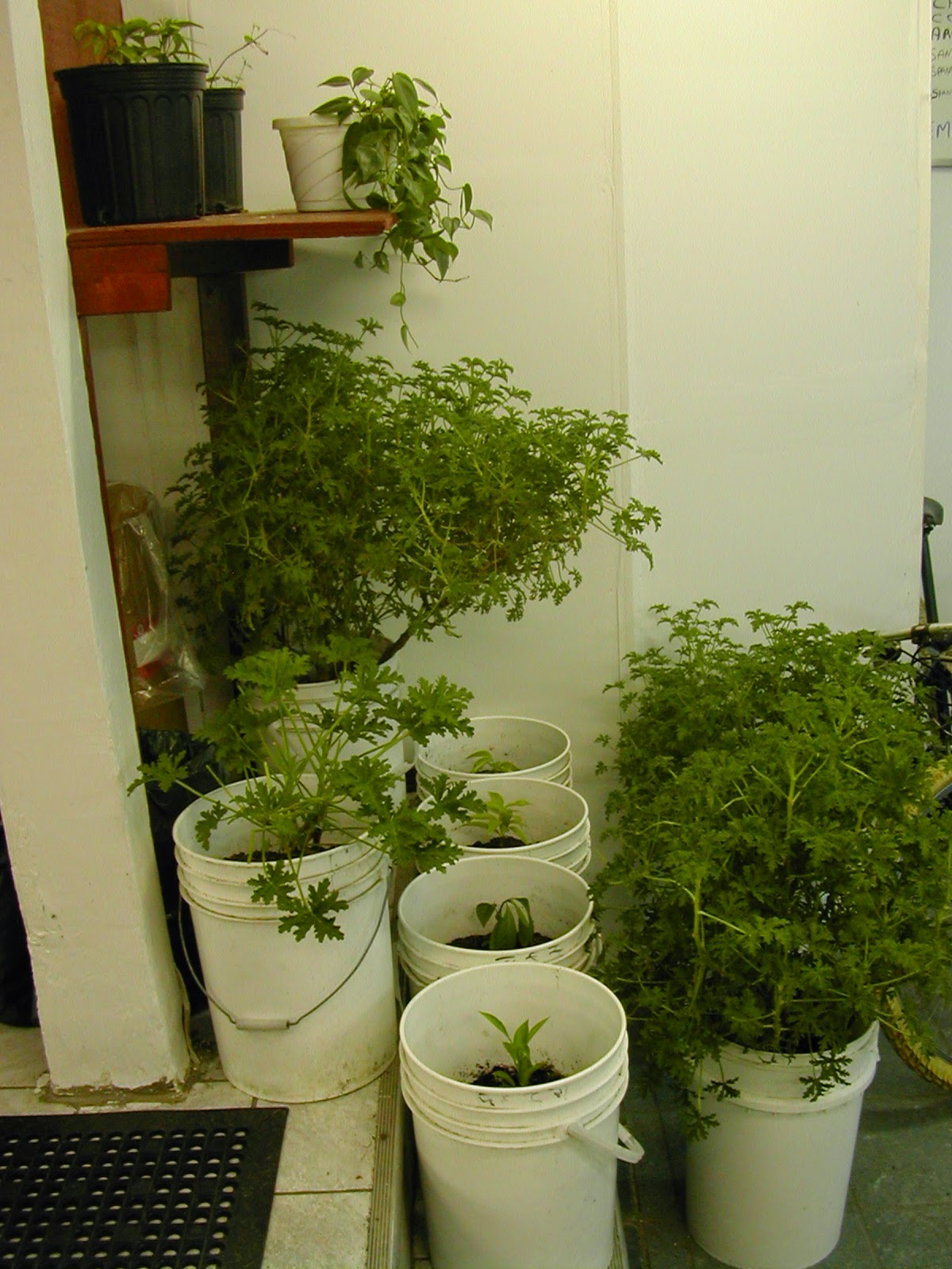 Go hydroponics easy guidelines to build sealed grow for Indoor gardening made easy