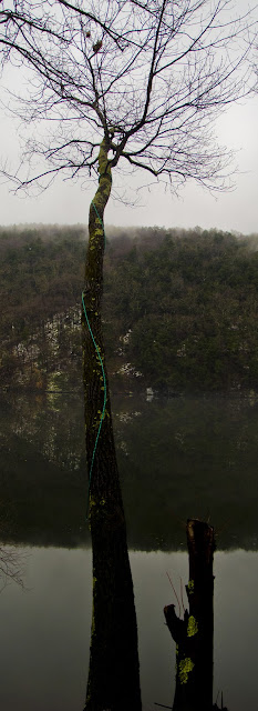 Tree &amp; swinging rope stretched out over Zoar Lake