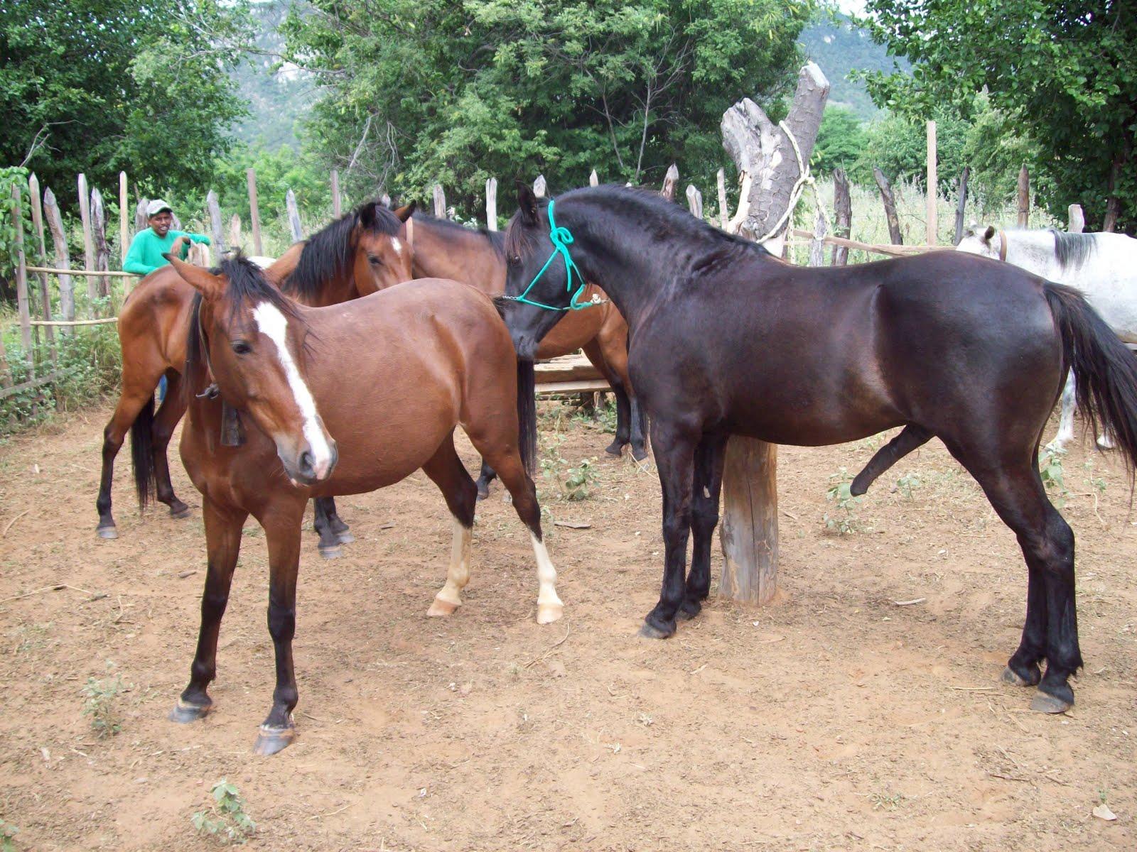 Fotos de cavalos cruzando com eguas 83
