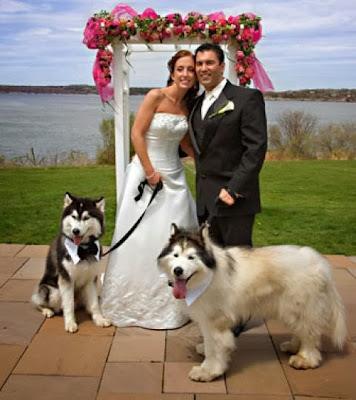 "<Img src = ""perroboda5.jpg"" alt = ""perros con novios en una boda, mascota"">"