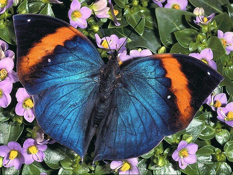 Best Desktop Wallpapers In The World. butterfly desktop wallpaper.