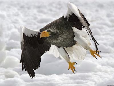 Eagle 2012