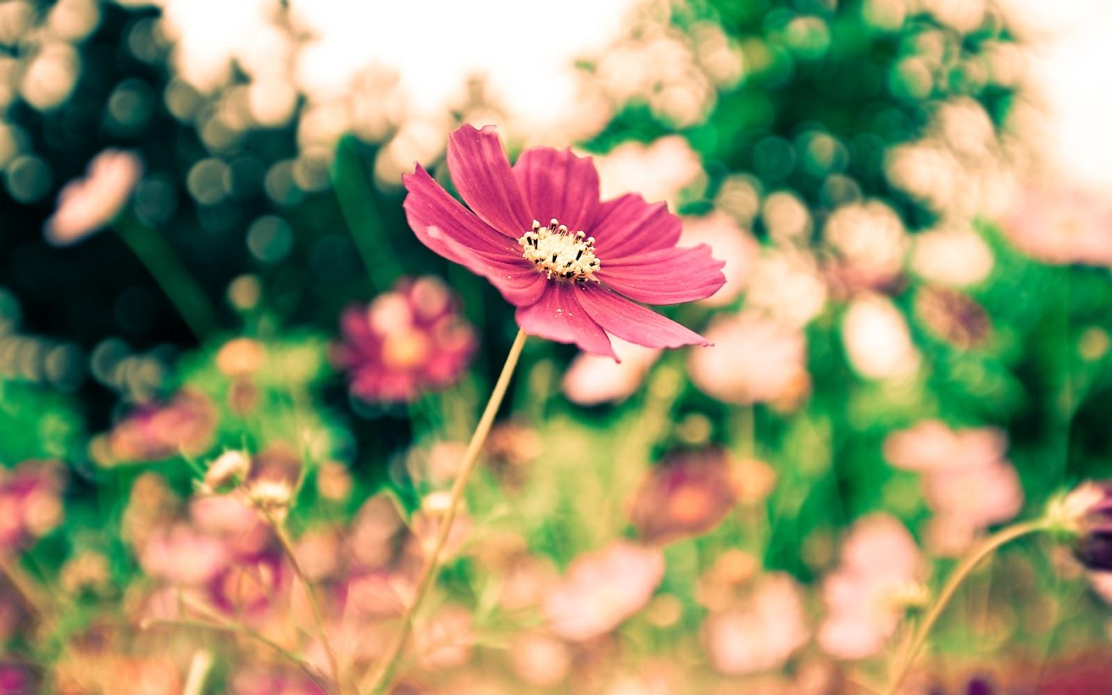 Hermosa Flor Rosada Imagen de Fondo HD