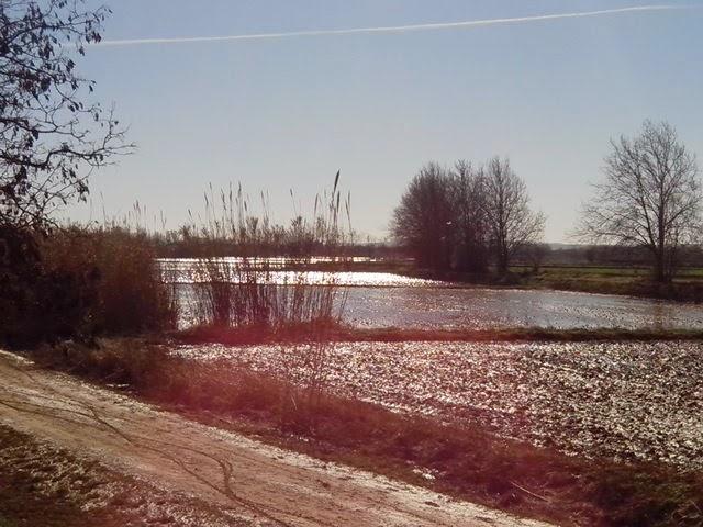 Campos inundados en Huerta de Las Fuentes Zaragoza