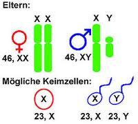 kromosom jenis kelamin anak