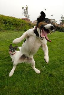 Perro salta para salir en la foto