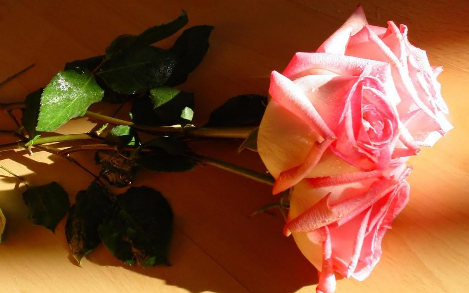 http://4.bp.blogspot.com/-pwezTrlff5c/TWEZG6nl1tI/AAAAAAAAAIc/KQfYhWmACGw/s1600/Rose_perfect_love_symbol_hd_wallpaper.jpg