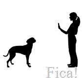 O treino do seu cão