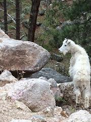 Finally, Mountain Goats