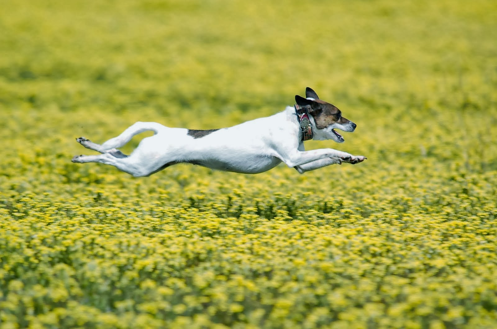 Click Here to View All My Dog Sports Photos!
