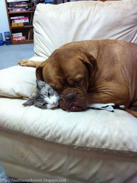 Dog and cat sleeping together.