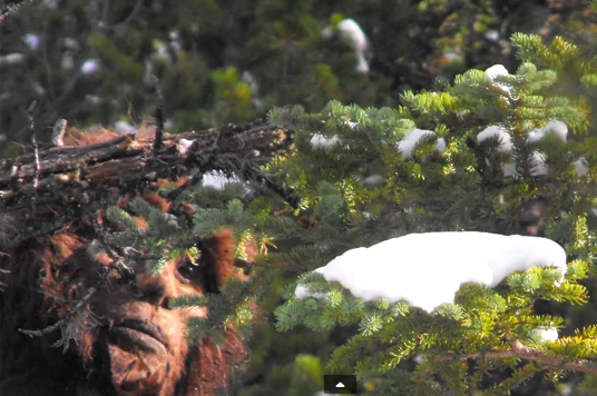 Todd Standing Bigfoot Video