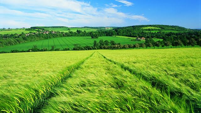Bộ hình nền đồng cỏ xanh tươi mát cho những ngày nóng bức