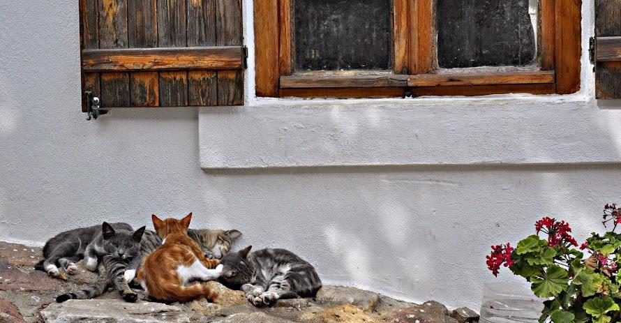 Pisicikler