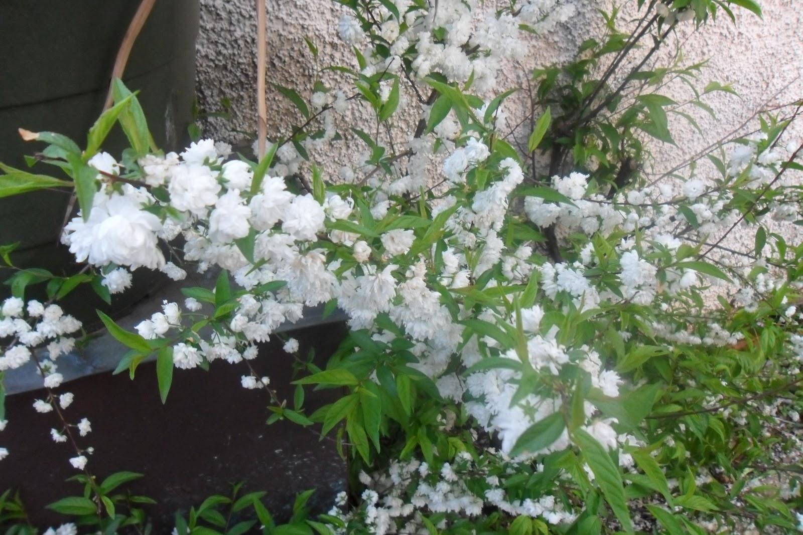 Ilclanmariapia dal mio giardino - Comporre un giardino ...
